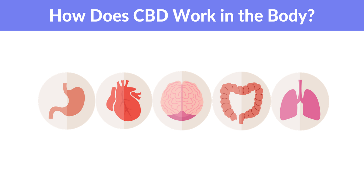 how does cbd work in the body - what is cbd ultimate guide