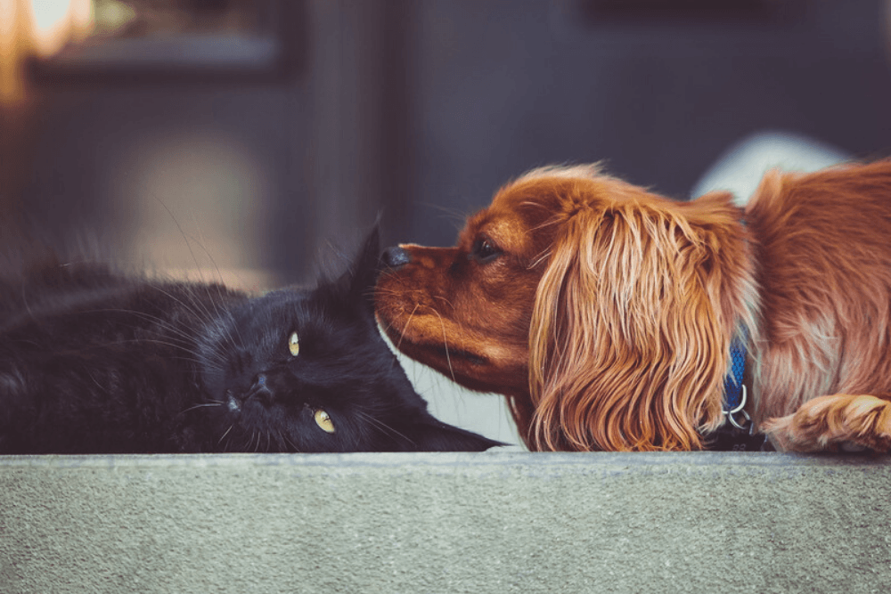 How Pet Benefits from CBD